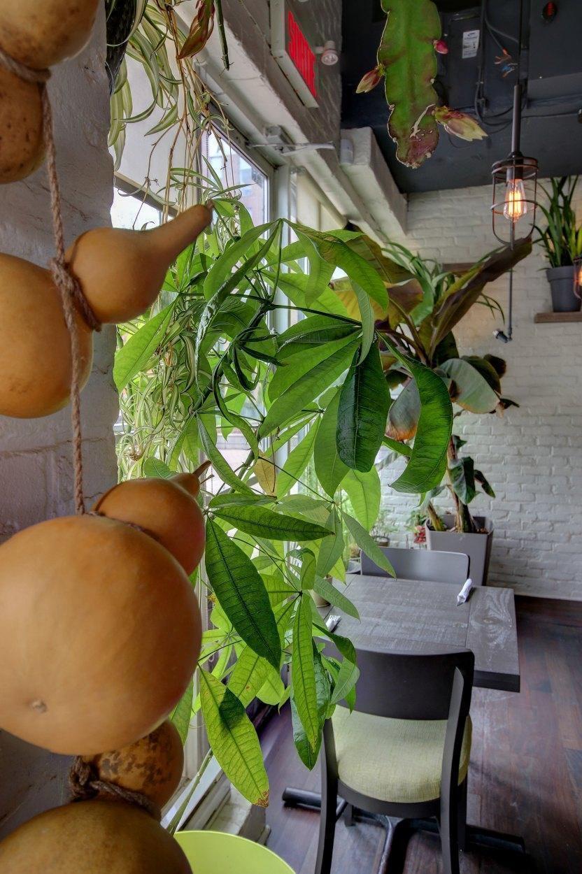Bananier - Restaurant Cuisine Thaïlandaise Île des Soeurs, Montréal